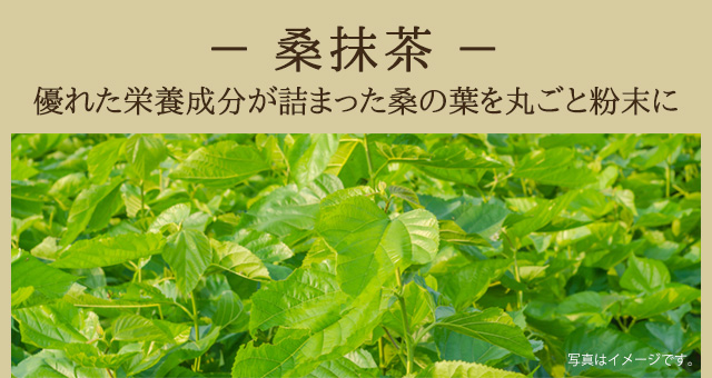 [桑抹茶]優れた栄養成分が詰まった桑の葉を丸ごと粉末に